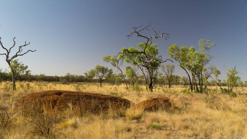 Typical landscape around monumental Uluru in Red Centre, Outback, Australia royalty free stock image