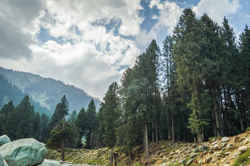 A typical landscape of Kashmir, India with pine trees, mountains and dramatic cloudy skies. A typical landscape of Kashmir, India with pine trees, mountains and stock photo