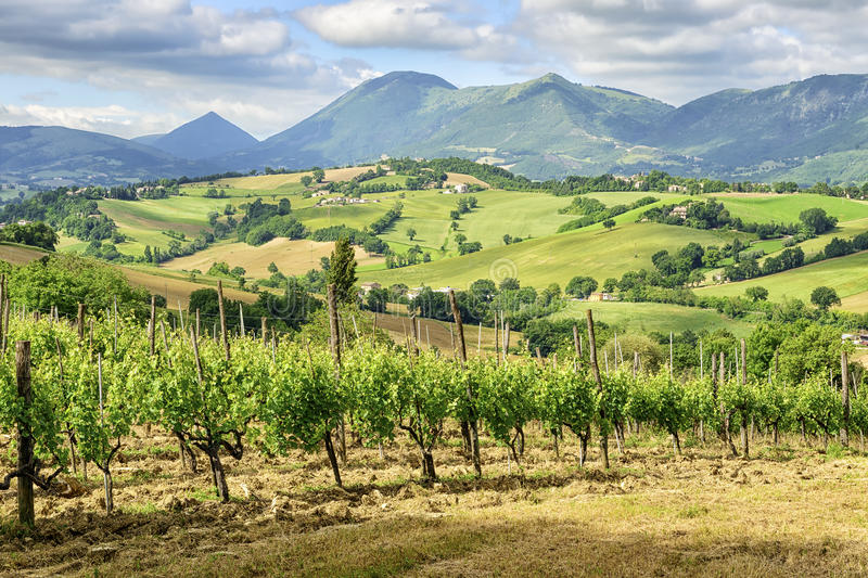 Typical landscape Marche Italy royalty free stock image