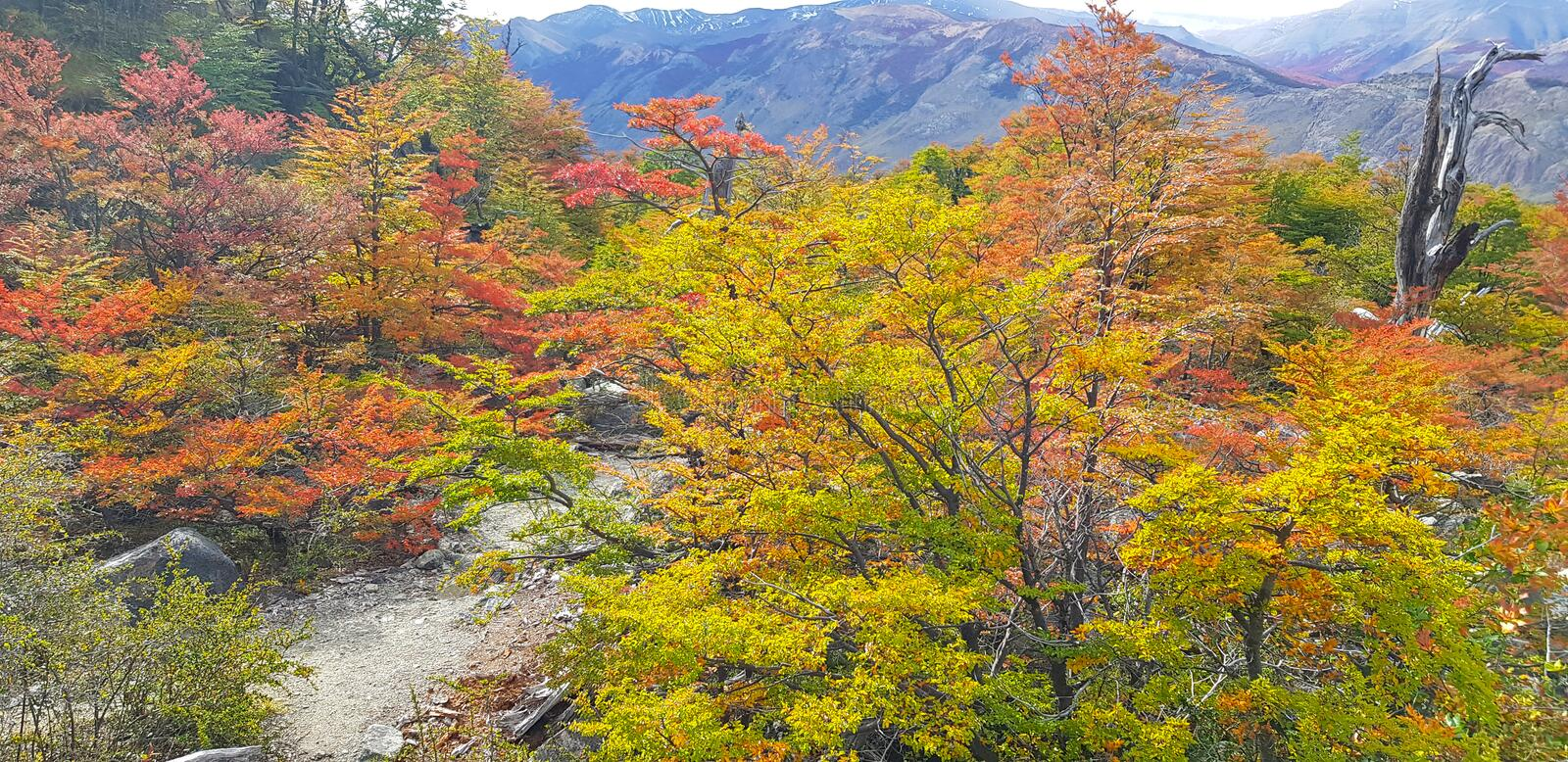 Typical landscape of Patagonia, colors of autumn leaves royalty free stock image