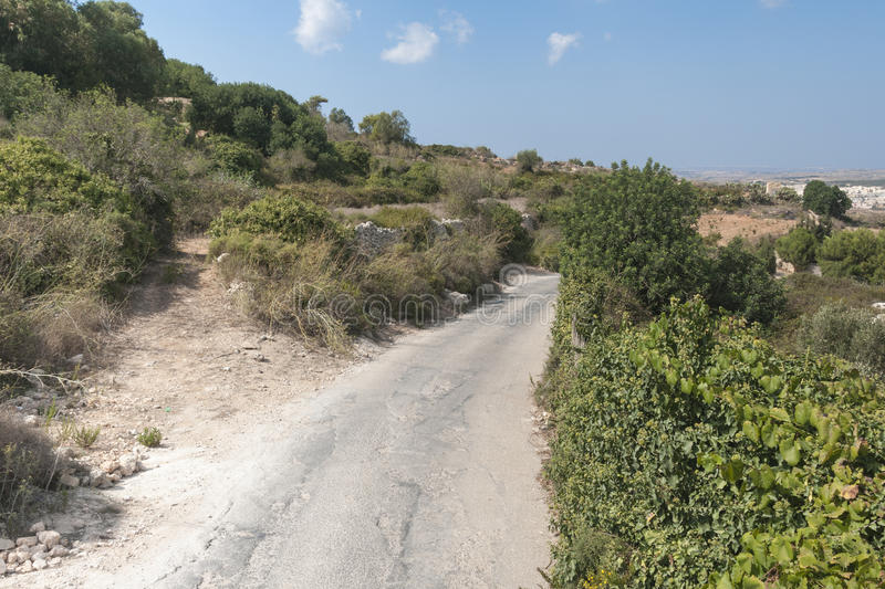 Typical nature on Malta. Typical nature with dry lands and green lants on the spanish island Malta stock photos