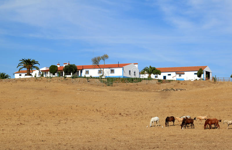 Typical portuguese quinta in the region Alentejo. Horses are grazing in the dry meadows of Alentejo in Portugal. At the background palm trees near an original royalty free stock photos