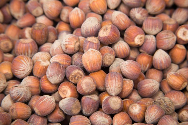 Hazelnuts typical products of Emilia Romagna. Typical products of Emilia Romagna royalty free stock photos