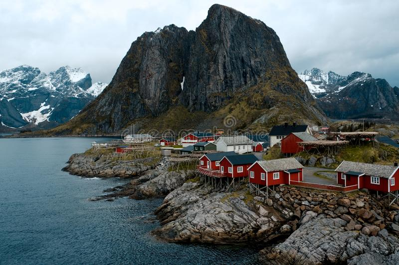 Typical red rorbu fishing huts with sod roof on Lofoten islands in Norway. Reflecting in fjord royalty free stock images