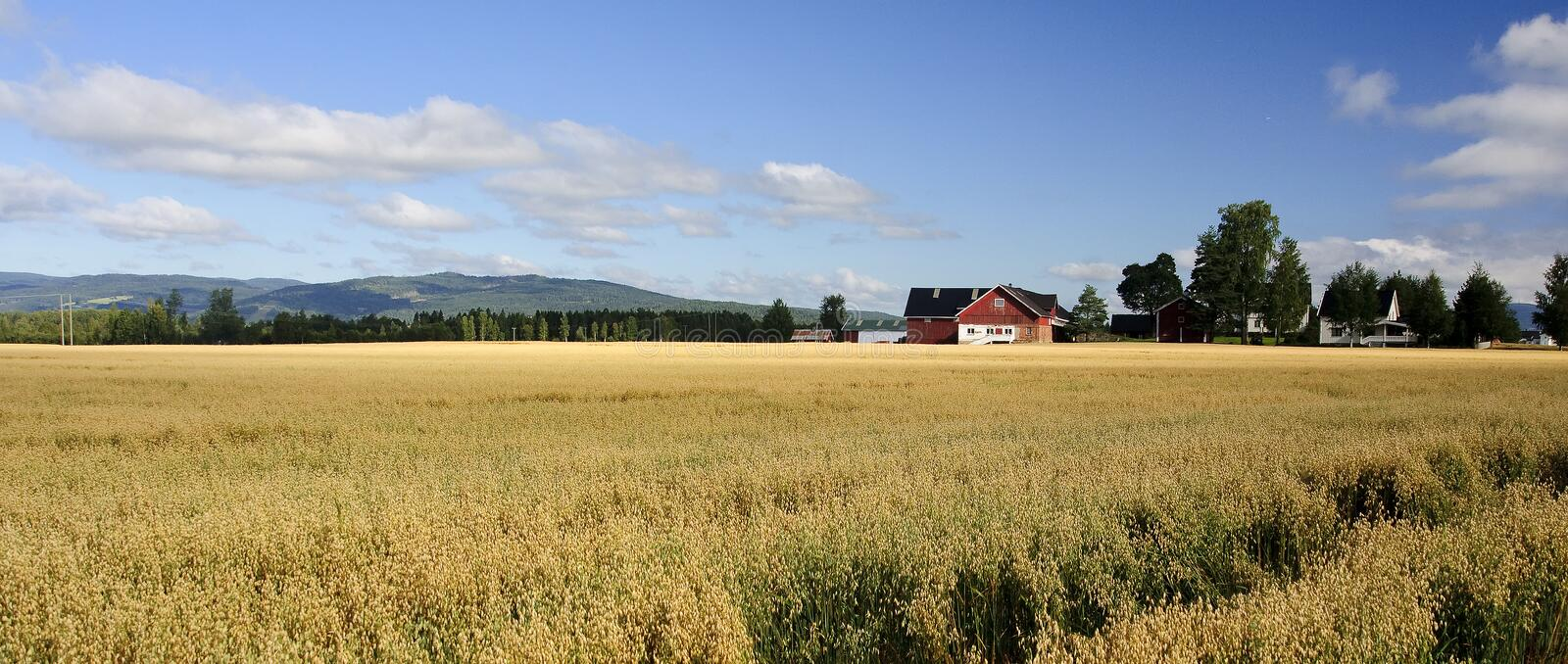 A typical Scandinavian farm royalty free stock images