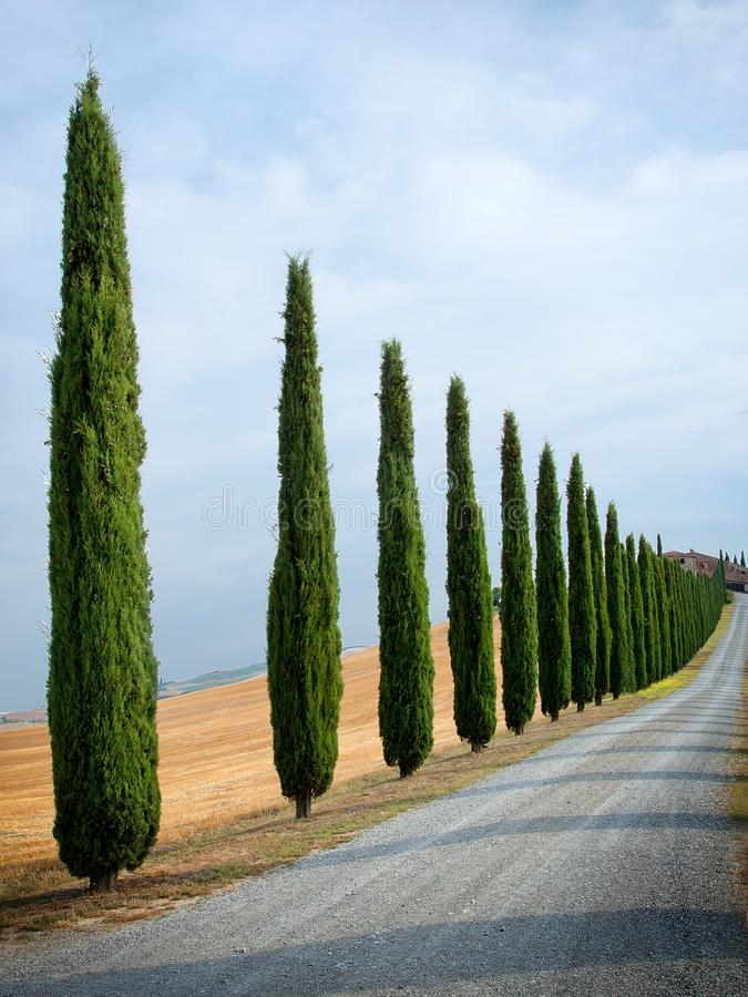 Download Typical tuscan landscape stock photo. Image of cloud - 23810600