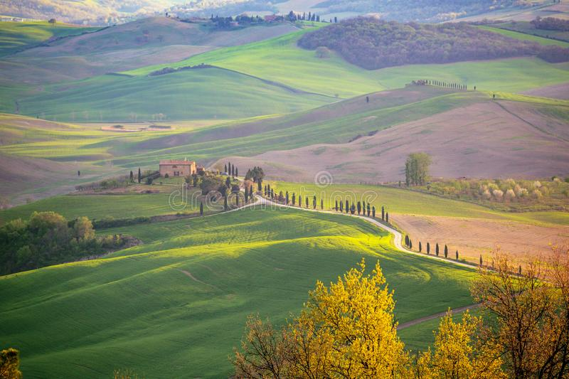 Typical Tuscan landscape. Magical morning. typical Tuscan landscape - a view of a villa on a hill and green fields at sunny day. province of Siena. Tuscany royalty free stock image