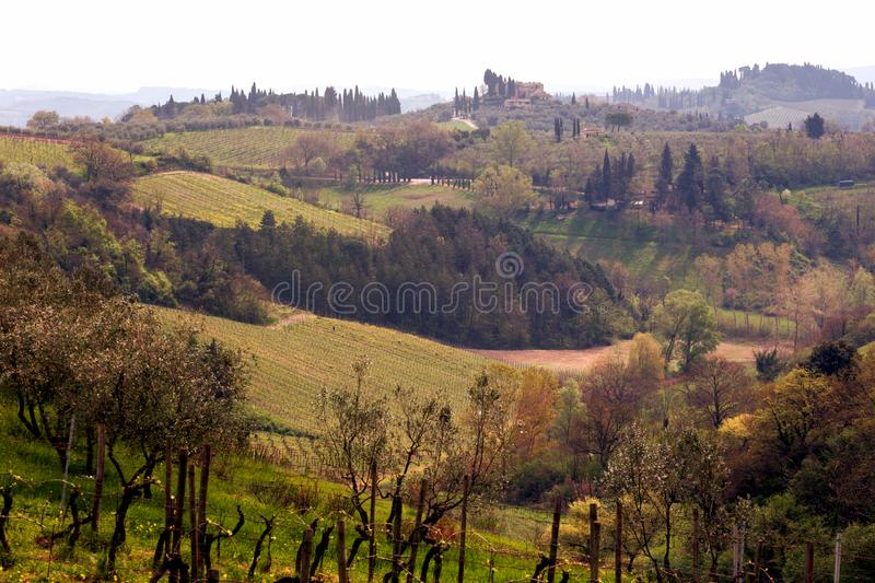 Typical Tuscan landscape. A view of a villa on a hill, a cypress alley and a valley with vineyards, province of Siena. Tuscany, Italy stock photos