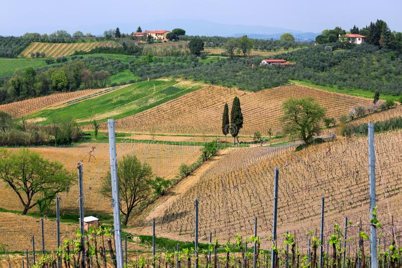 Typical Tuscan landscape. A view of a villa on a hill, a cypress alley and a valley with vineyards, province of Siena. Tuscany, Italy royalty free stock photography