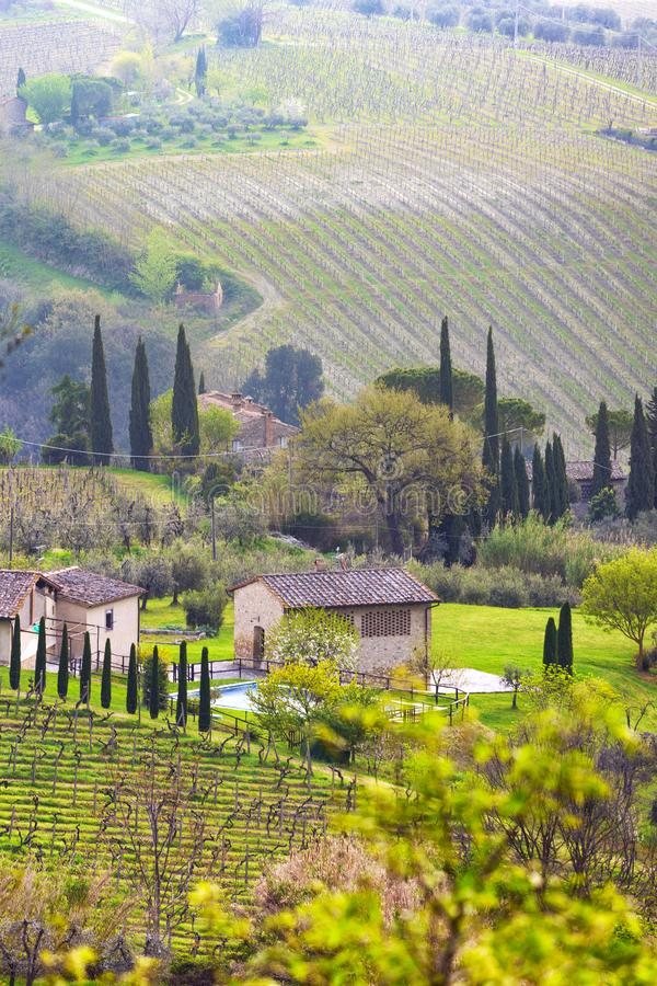 Typical Tuscan landscape. A view of a villa on a hill, a cypress alley and a valley with vineyards, province of Siena. Tuscany, Italy royalty free stock image