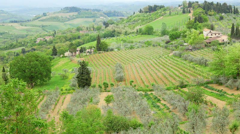 Typical Tuscan landscape with vineyards. And farms royalty free stock images