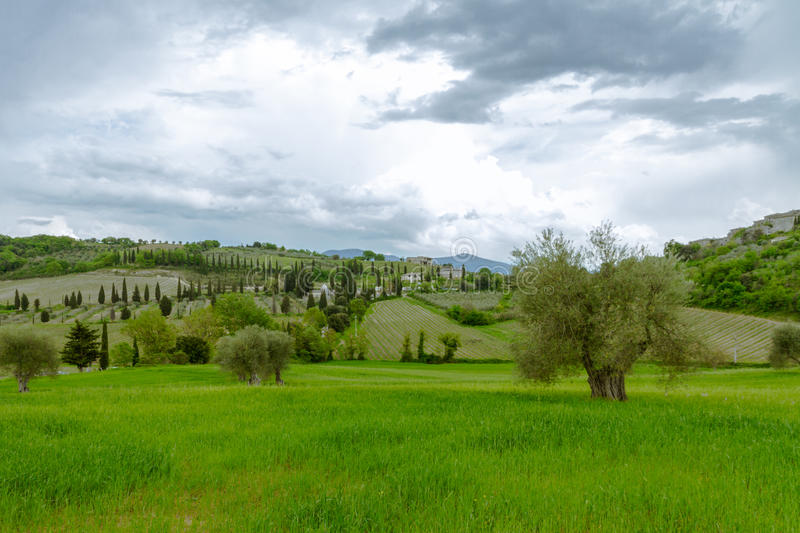 Typical Tuscan views. The picture was taken near Kastelnoovo dell'Abate. Typical Tuscan views of farms, fields, vineyards royalty free stock photo