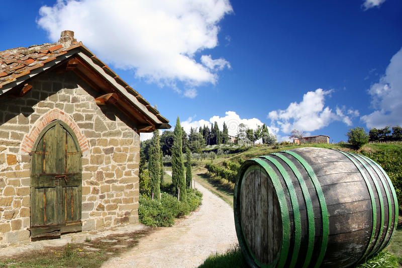 Typical vineyard in region Chianti stock image