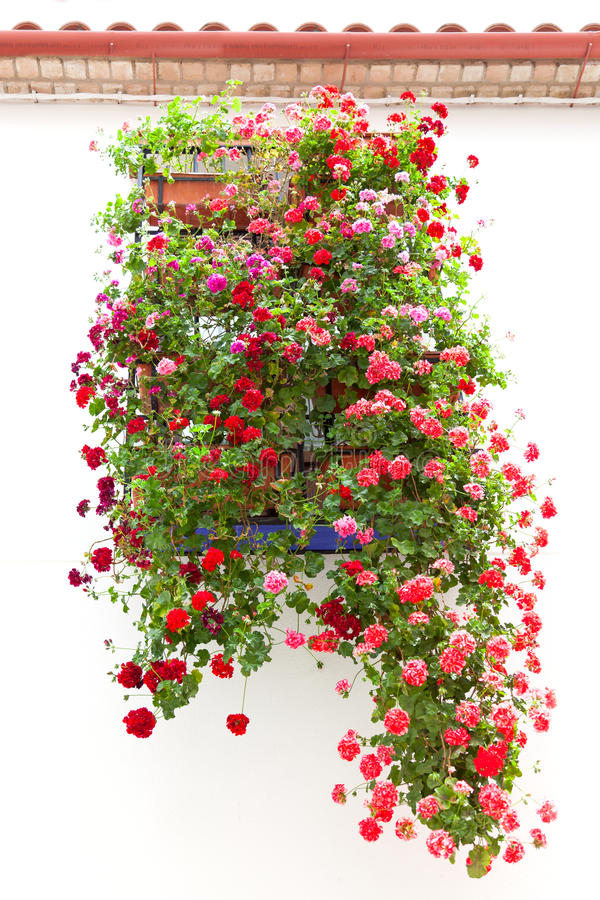 Download Typical Window Decorated Pink And Red Flowers, Mediterranean Eur Stock Photo - Image of cordoba, home: 37927446
