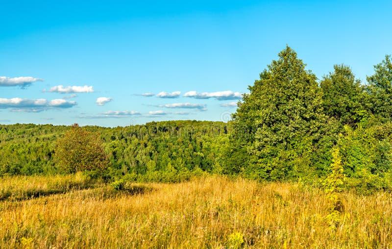 Typisch landelijk landschap van Kursk-gebied, Rusland stock foto's