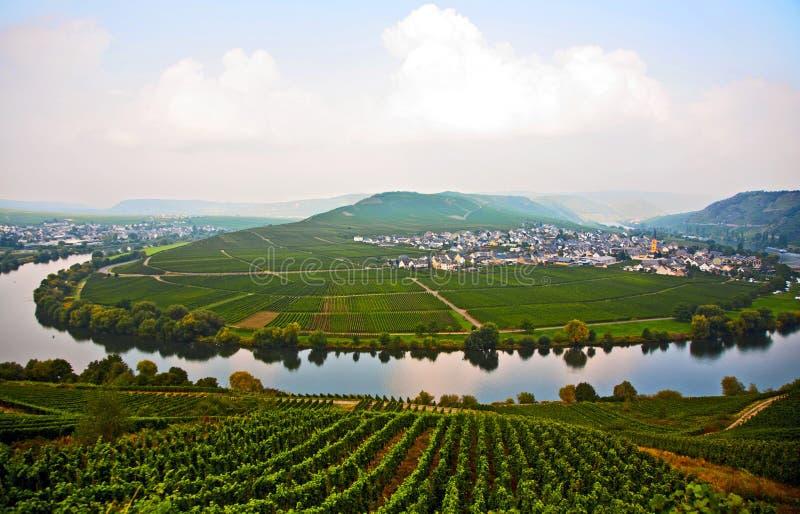 Typisch landschap van de wijngaarden van Moezel dichtbij Trittenheim royalty-vrije stock afbeeldingen