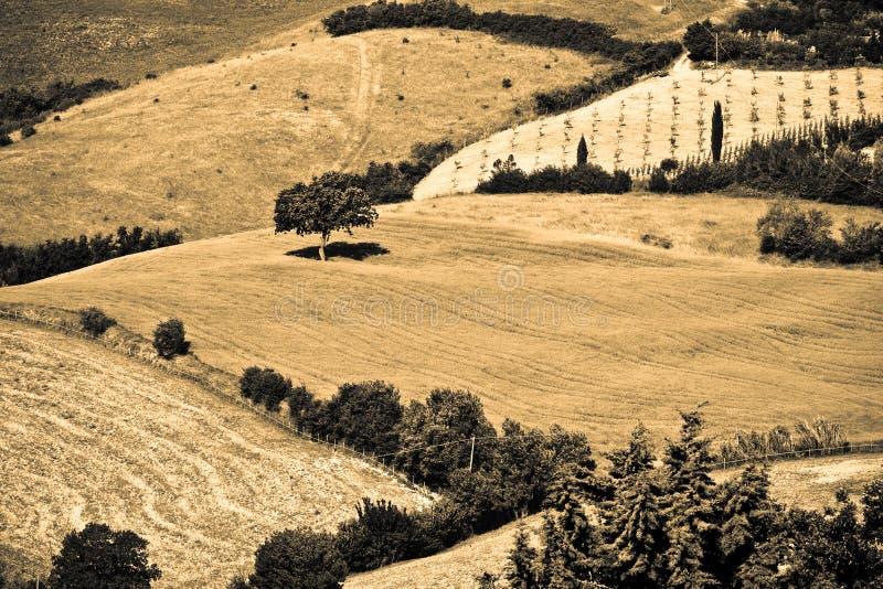 Typisch Toscaans landschap stock afbeelding