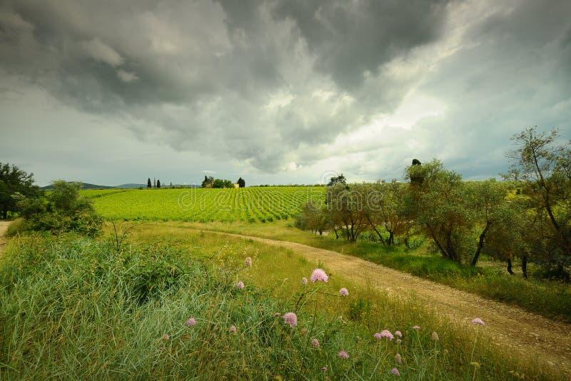 Typisch Toscaans landschap met groene wijngaarden, olijfbomen en bloemen in de voorgrond Italië royalty-vrije stock afbeelding