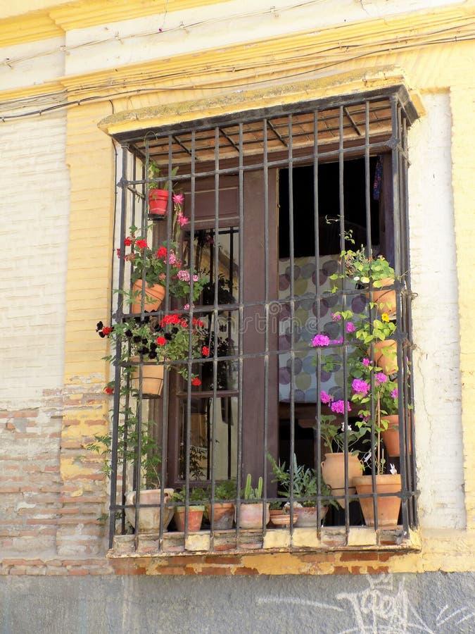 Typisch venster met bloem-Granada - Andalusia royalty-vrije stock fotografie