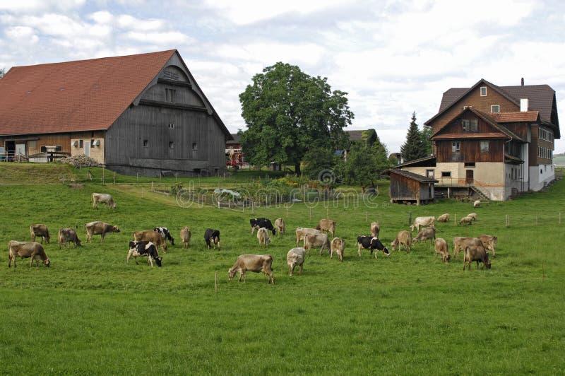 Typisch Zwitsers Landbouwbedrijf stock foto