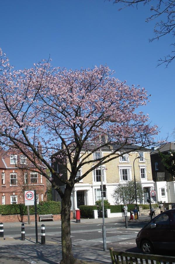 Typische englische Stadtstraße am Frühling lizenzfreie stockfotografie