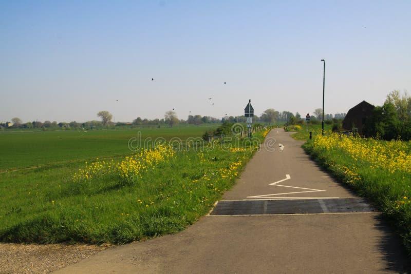 Typische Holländer pflasterten ländlichen Radweg mit grünem Gras und gelbem Löwenzahn und Rapssamenblüten auf beiden Seiten lizenzfreie stockfotos