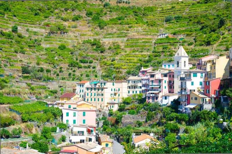 Typische Italiaanse gebouwenhuizen en groene wijngaardterrassen in vallei van Manarola-dorps Nationaal park Cinque Terre royalty-vrije stock afbeeldingen