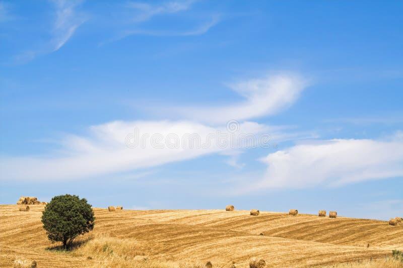 Typische Mediterrane landscap royalty-vrije stock fotografie