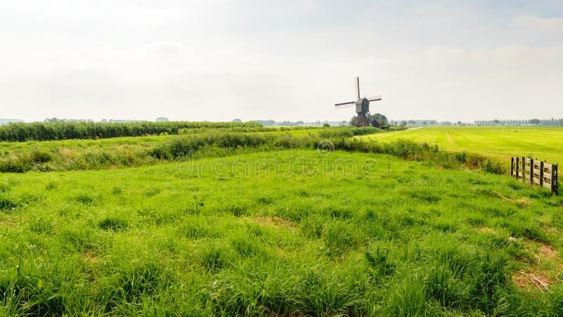 Typische niederländische Polderlandschaft in der Sommersaison stockbild