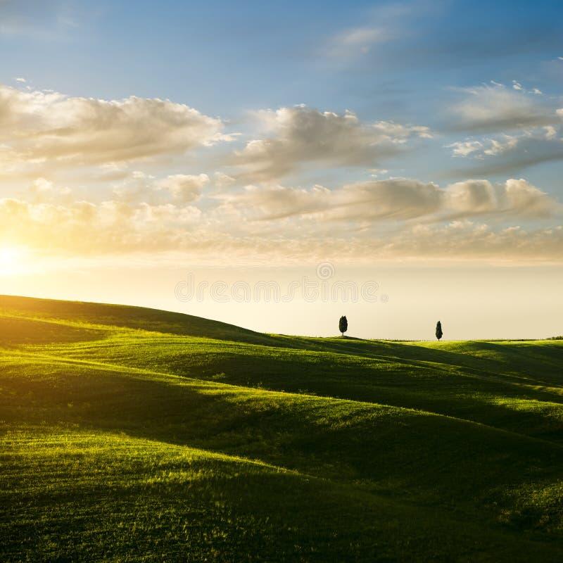 Typische toskanische Landschaft Grüne Wiese mit Zypressenbäumen auf Horizont im Sonnenuntergang lizenzfreie stockbilder