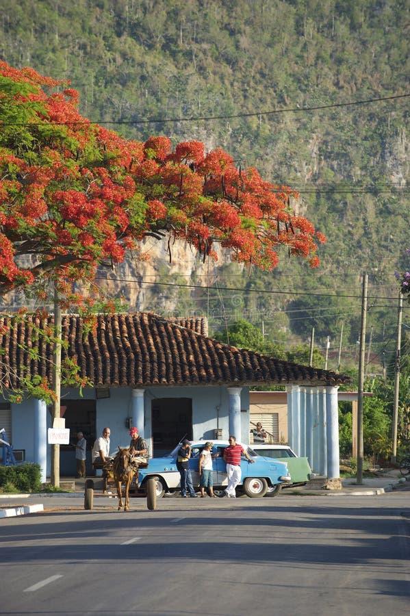 Typisches ländliches Szenen-Pferd und Buggy Vinales Kuba lizenzfreies stockfoto