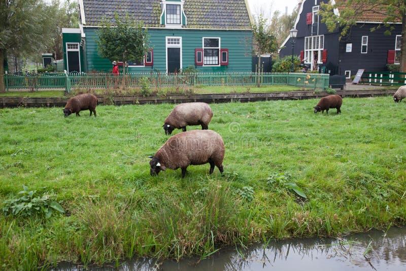 typisk holländskt hus i Zaandam royaltyfri foto