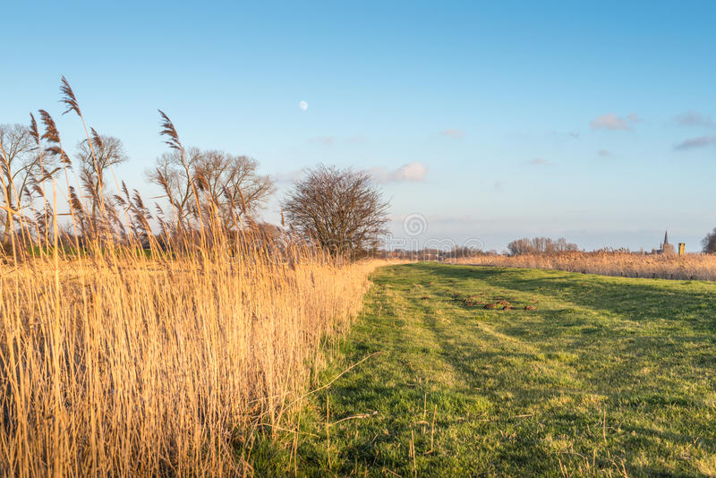 Typisk holländskt landskap under solnedgång royaltyfria foton