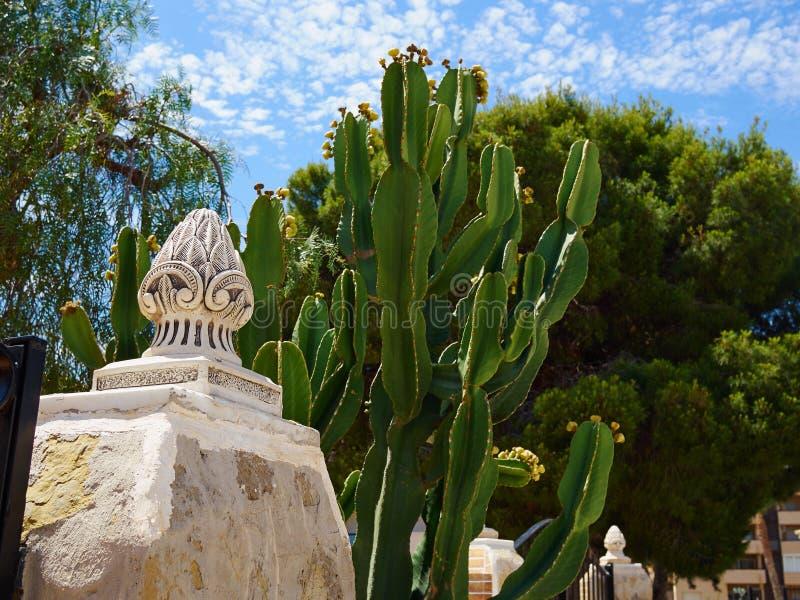 Typisk kaktus vid ett hus i Spanien arkivfoto