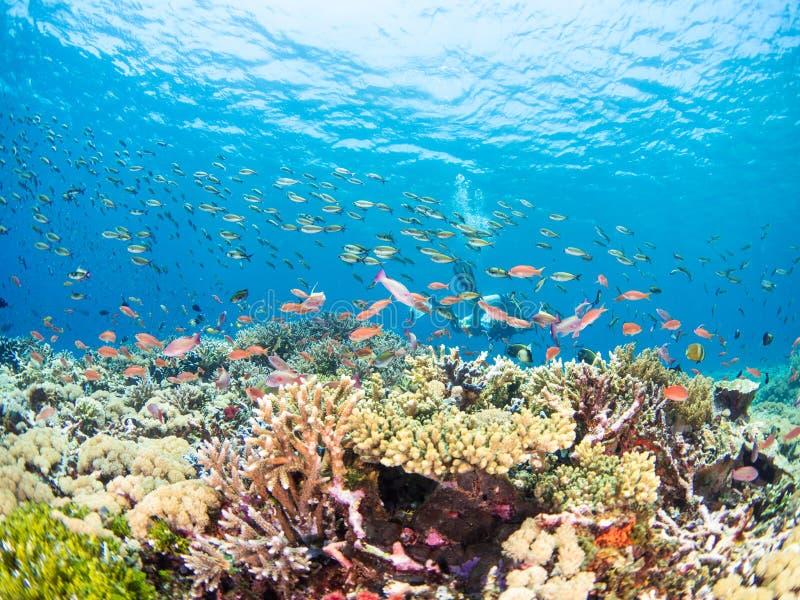 Typisk korallrev i den Komodo nationalparken arkivfoton