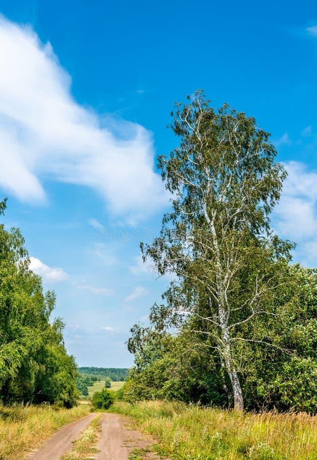 Typisk lantligt landskap av den Kursk regionen, Ryssland arkivfoto
