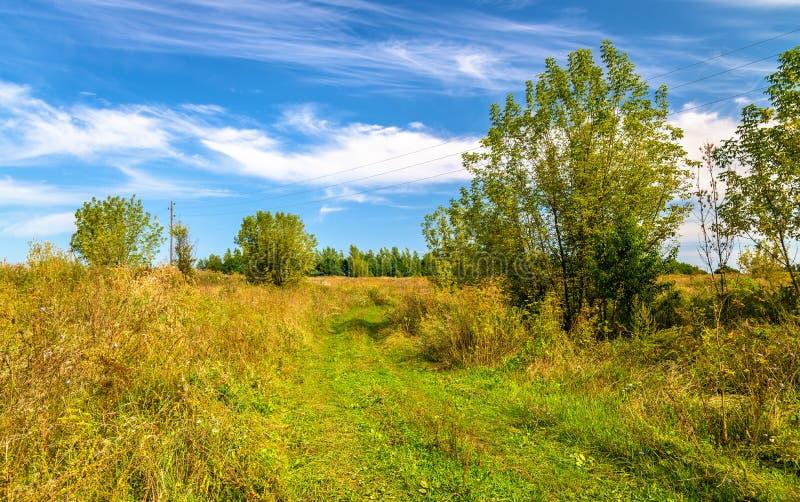Typisk lantligt landskap av den Kursk regionen, Ryssland fotografering för bildbyråer