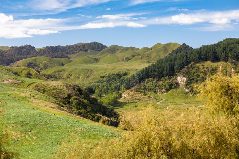 typisk lantligt landskap i Nya Zeeland royaltyfri fotografi