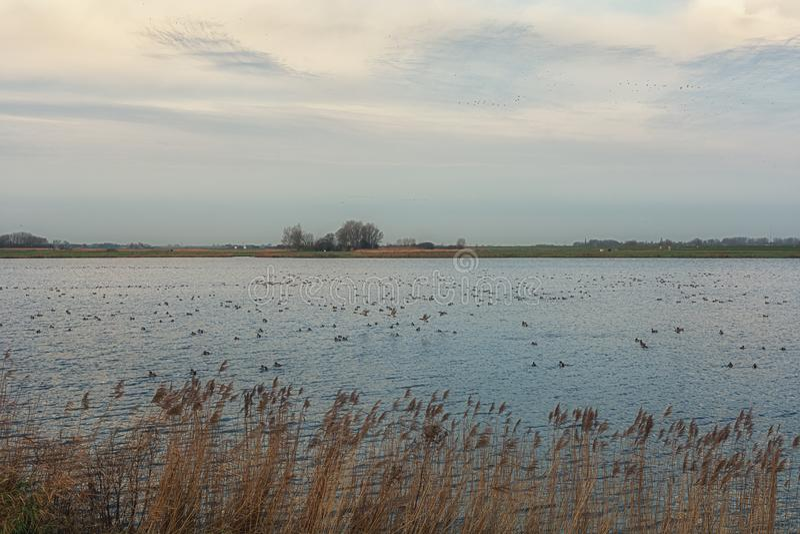 Typisk plan holländsk polder med dess diken och sjöar fotografering för bildbyråer