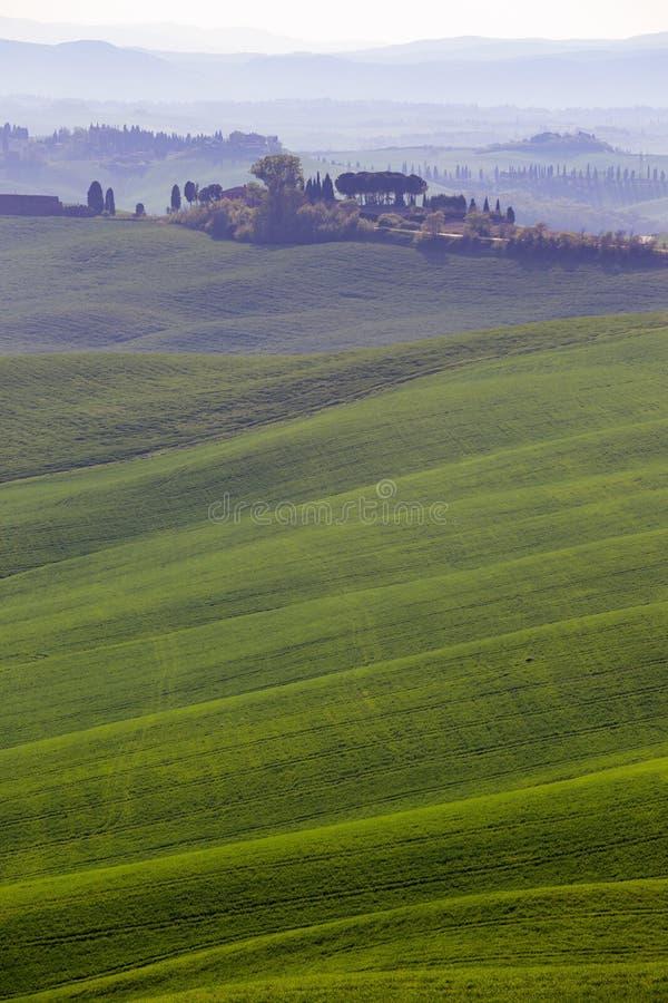 Typisk Tuscan landskap - gröna vågor arkivfoto
