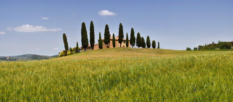 Typisk Tuscany landskap, jordbruksmark I Cipressini Träd för italiensk cypress och vetefält med blå himmel Lokaliserat på Pienza  arkivfoto