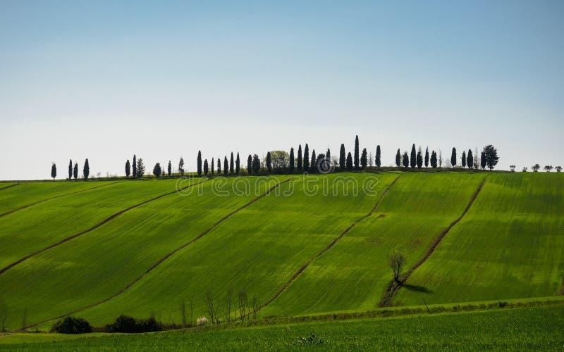 Typisk Val D 'Orcia landskap i Tuscanyen, Italien royaltyfri bild
