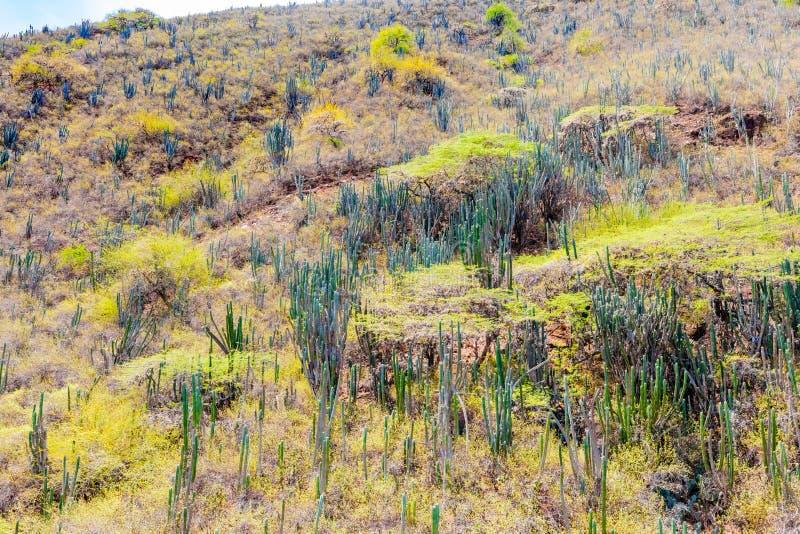 Typisk vegetation av den Chicamocha kanjonen Los Santos Colombia arkivbild