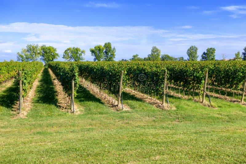 typisk vingård i nordliga Italien Trentino royaltyfri bild