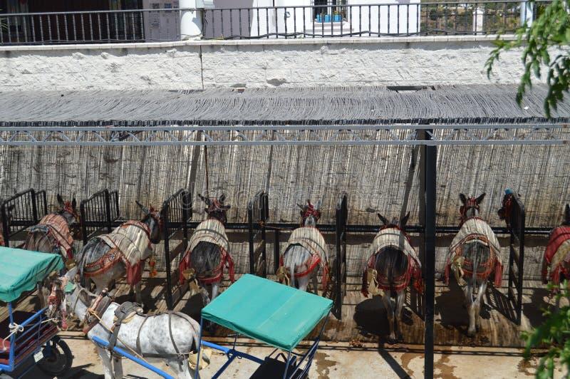 Typiska åsnor av Mijas efter en varm arbetsdag royaltyfri bild