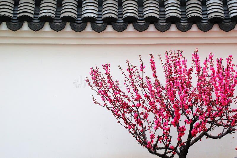Typiska byggnader i södra Kina royaltyfri fotografi