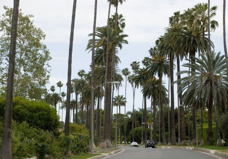 Typiska höga palmträd på Beverly Glen Boulevard, Los Angeles - Kalifornien royaltyfria bilder