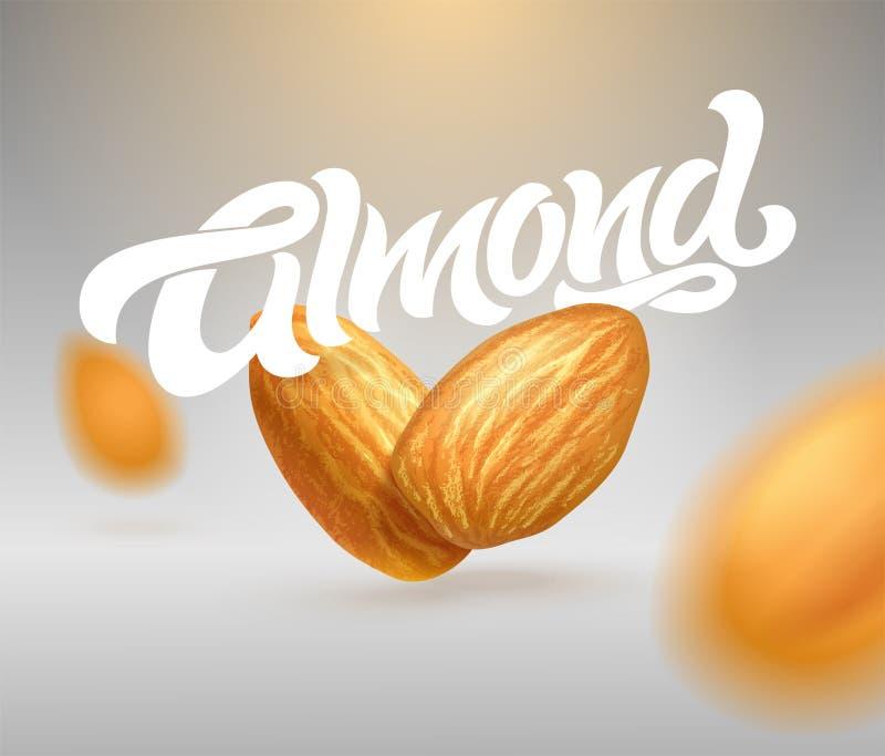 Typographie d'AMANDE avec l'illustration réaliste des amandes Calligraphie moderne de brosse illustration 3D Calibre pour la conc illustration de vecteur