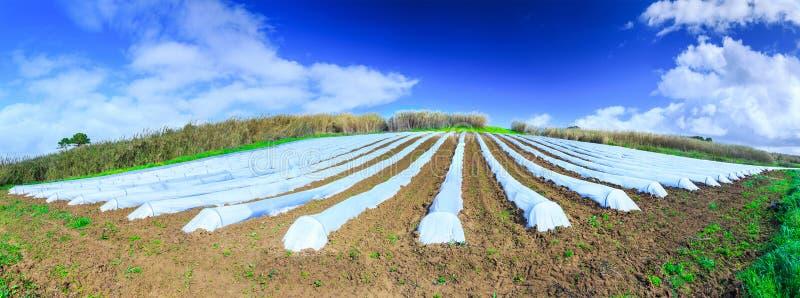 Typowa rolnictwo technologia wczesna wiosny kultywacja fotografia stock