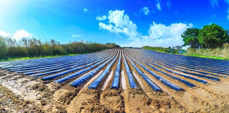 Typowa rolnictwo technologia wczesna wiosny kultywacja zdjęcia stock